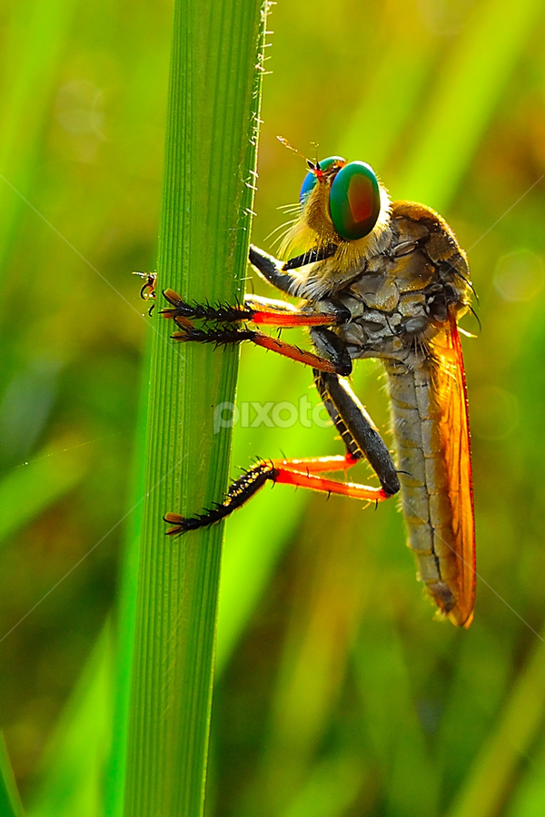 Sun Bathing by Chandra Erdiansyah - Animals Insects & Spiders