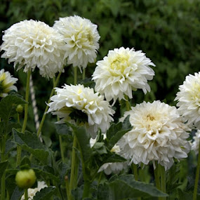 by Pitt N Sartoni - Nature Up Close Flowers - 2011-2013