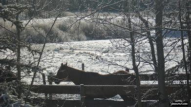 Photo: Horsy at Moose Mountain Ranch