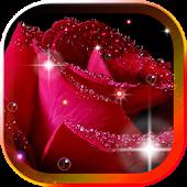Rose Morning Dew 2015 LWP