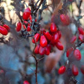 SOmething red by Tom Mat - Nature Up Close Other plants