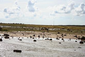 Photo: Üks lammas :)