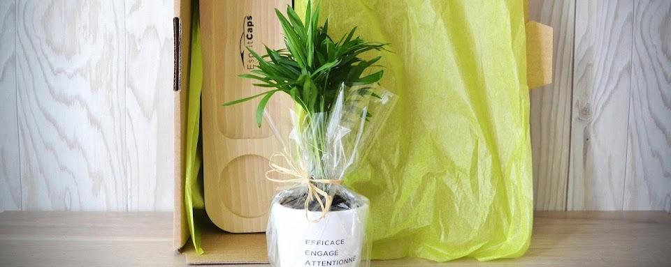 plateau vide poche bois plante