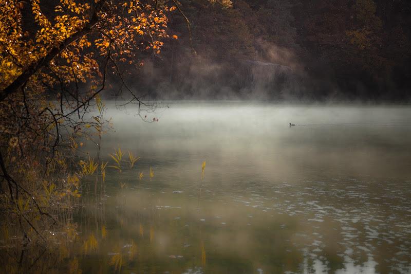 la serenità della mattina di AnUseless