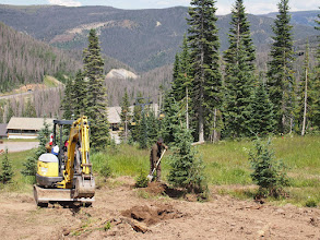 Photo: Final work on the transplanted trees.