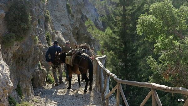 Traseul de coborâre în cheile Samaria
