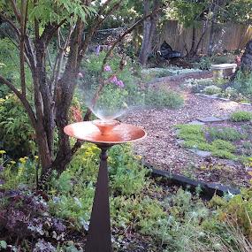 Copper Mist by Denise DuBos - City,  Street & Park  Neighborhoods ( english, copper, garden, mist, elegant )