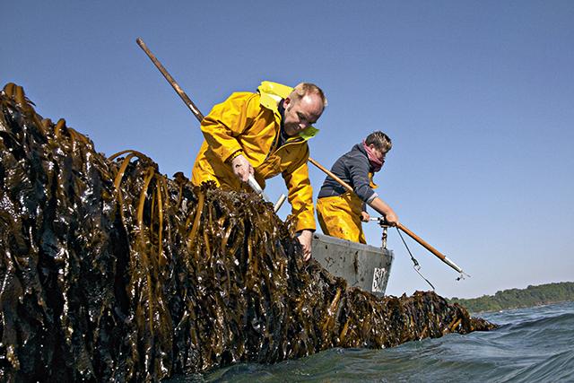 O fundador de AlgoPack, Remy Lucas, trabalhando com algas orgânicas