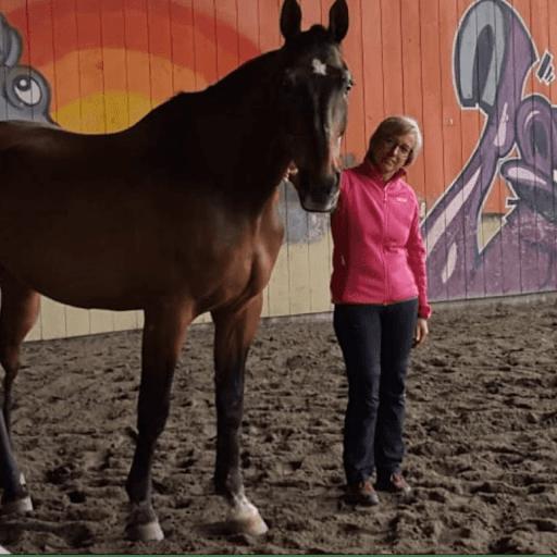 Mit Pferd und Mensch im Gespräch