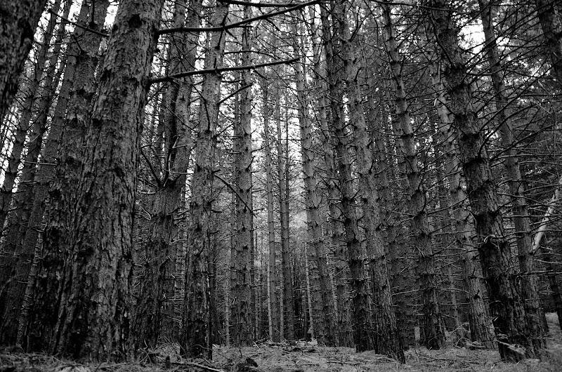 le linee del bosco di Salvador