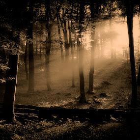 by Damir Ipavec - Landscapes Forests