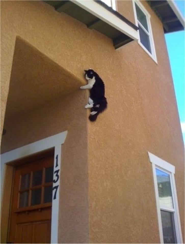 Spider - Cat!