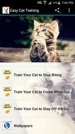 免費下載生活APP|Easy Cat Training app開箱文|APP開箱王