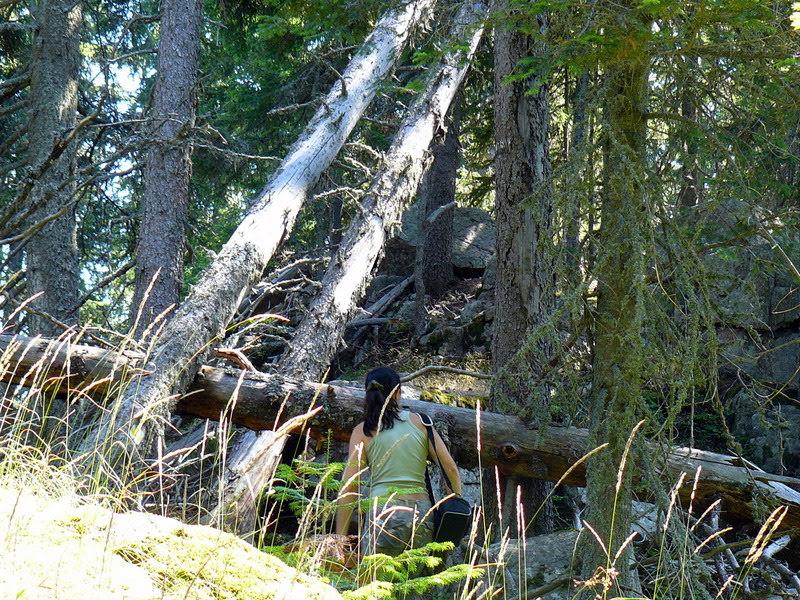 Паднали дървета в Родопите