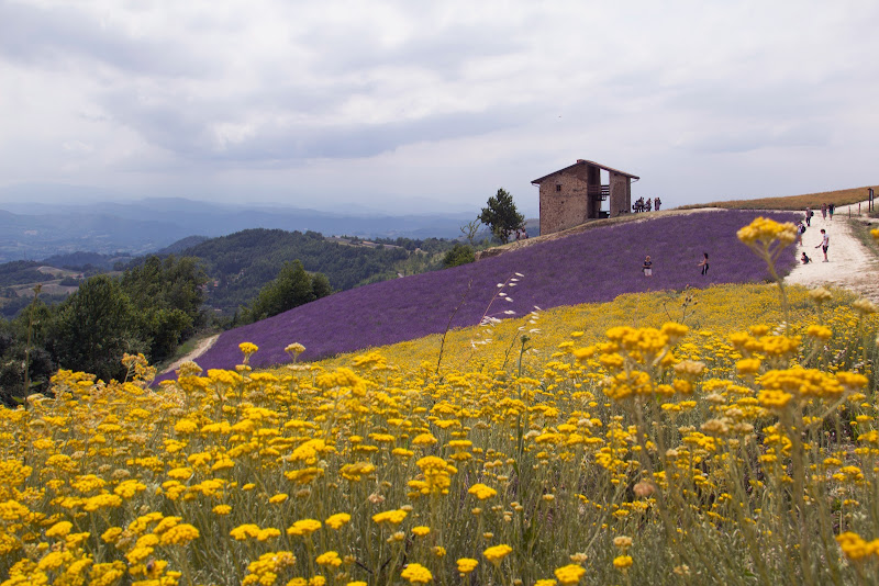 Le Langhe in fiore di Naldina Fornasari