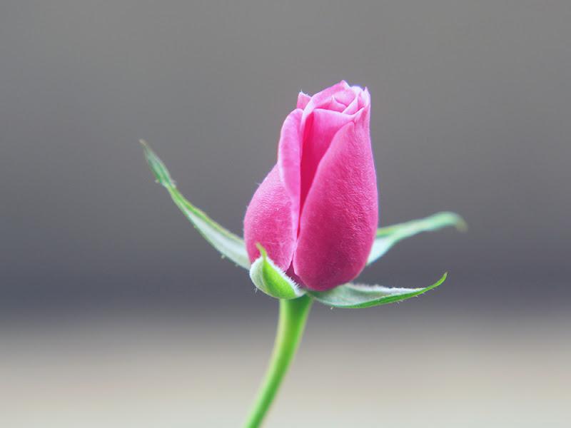 La sessualità vista nei fiori di IBPhotos