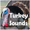 st natural sound turkey - 300×300