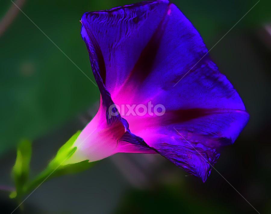 by Joyce Williams Carr - Flowers Single Flower