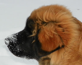 Photo: Ma première neige, c'est trop sympa la neige