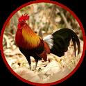 Red junglefowl icon