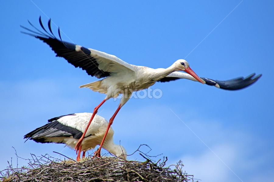 Leaving Home by Ad Spruijt - Animals Birds ( bird, fly, flight,  )