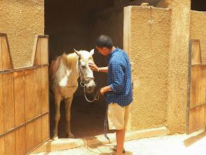 Photo: Horses at Toubab Dialaw