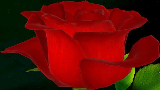 Rose Flower 3D
