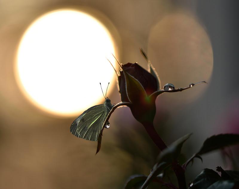 Lady butterfly di utente cancellato