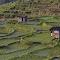 Rice fields in Flores.jpg