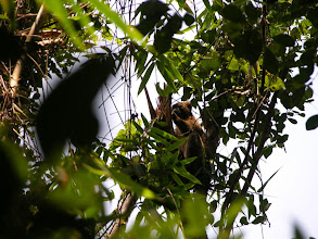 Photo: Our camera couldn't capture the joy of finding lemurs in the trees. Here is a try.
