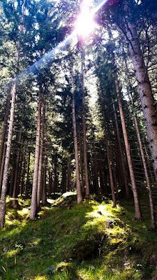 Into the wild di albericofiore