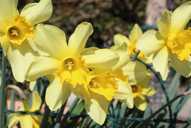 Narciso di giulyy