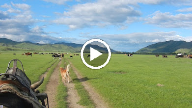 Video: ...and this is what it's like to ride an oxcart.