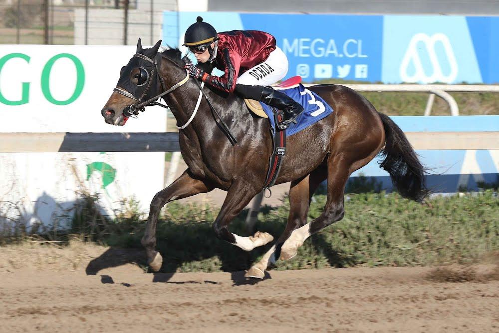 Puyuhuapi II (Interaction) ganó Handicap (1000m-Arena-CHS). - Staff ElTurf.com