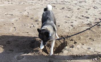 Photo: Rozz måste ju busa lite, det är ju så roligt att gräva i sanden