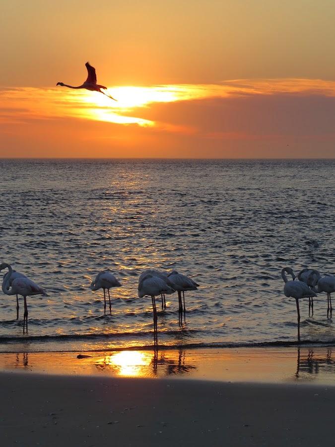 Flamingo Lullaby by Jo-Ann de Smit - Novices Only Landscapes ( lagoon, namibian coast, sunset, flamingo,  )