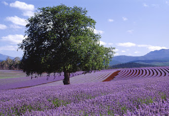 An Australian lavender farm has become a tourist destination thanks to digital tools.