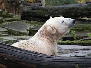 Photo: Knut goennt sich eine kleine Pause ;-)