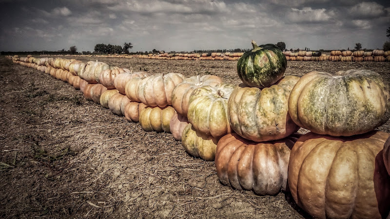 è tempo di zucche !!! di Marcello Zavalloni