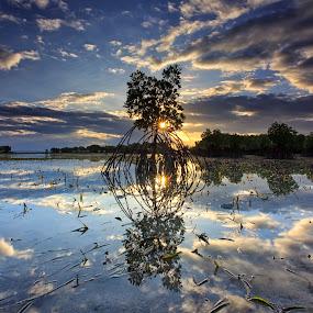 Serenity by Hiram Abanil - Landscapes Waterscapes ( sunburst, serene, mangrove )