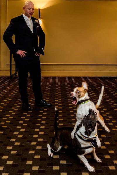 Wedding photographer Steven Herrschaft (stevenherrschaft). Photo of 24.03.2020