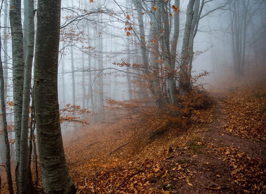 by Vaska Grudeva - Landscapes Forests (  )