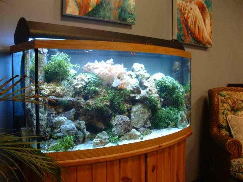 Aquarium decoration ideas android apps on google play for Aquarium house decoration