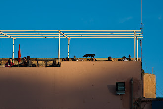 Photo: A weeoo walking around the walls in the restaurants that surround the market square in Marrakech