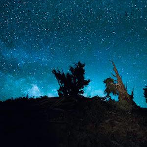 bristlecone_pine.jpg