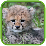 Real Cheetah Cub Simulator