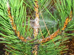 Photo: Bei soviel Nebel empfehlen sich nahe Motive, wie etwa das Kunstwerk einer Spinne ...