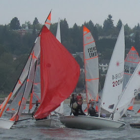 Racing on English Bay by Manny Tovim - Sports & Fitness Watersports