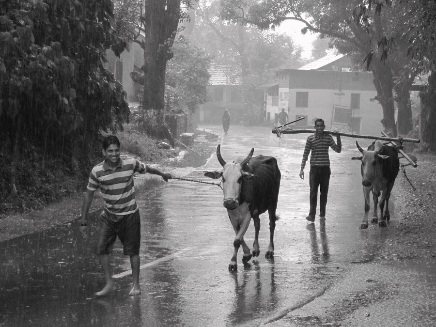 monsoon bring smiles by Parvesh Rana - News & Events World Events