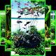 Download Aquarum Aquascape Design For PC Windows and Mac